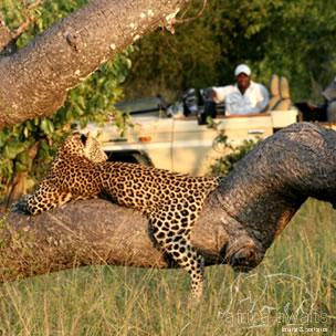 Tintswalo Safari Lodge Kruger National Park 3