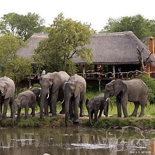Simbambili Game Lodge Kruger National Park 3