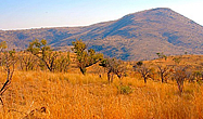 Shepherd�s Tree Game Lodge Pilanesberg